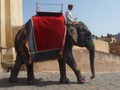 Elephant - India