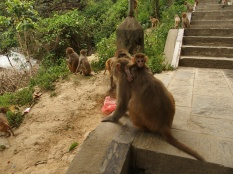 Macaque famille