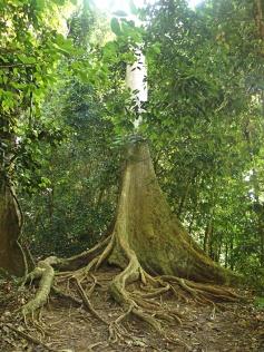 Taman Negara - Malaisie