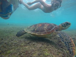 Tortue Apo Island - Philippines