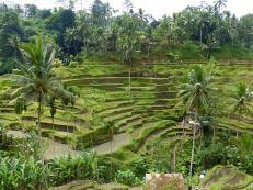 Ubud - Indonésie