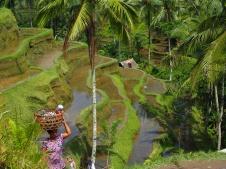 Rizières Ubud - Indonésie