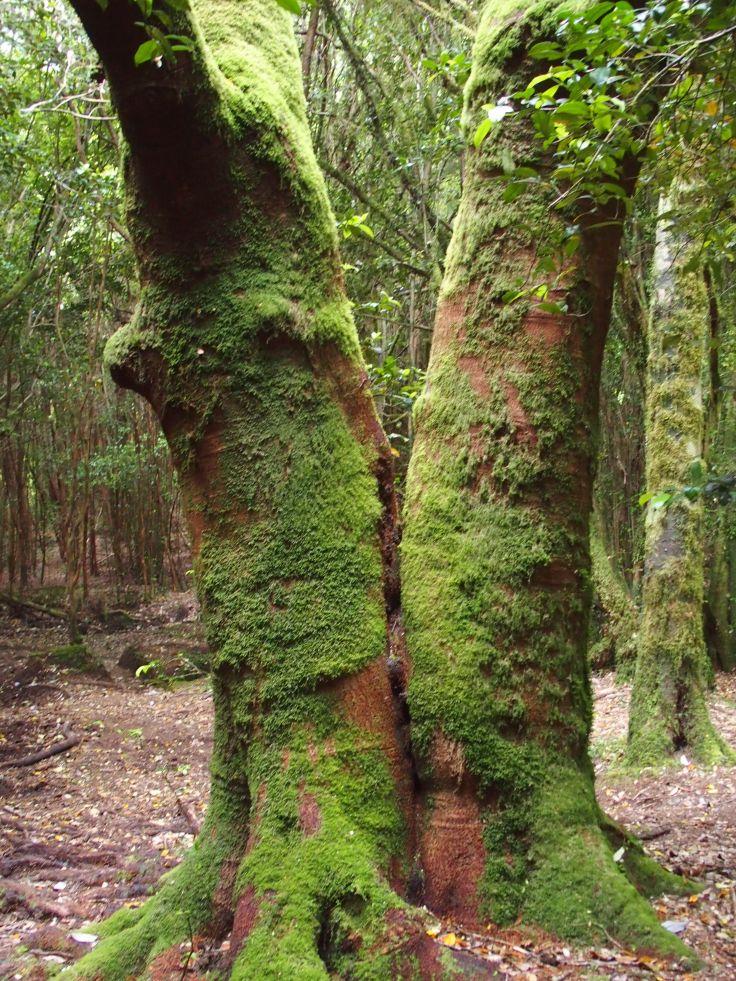 Trekking La Junta - Cochamo - Twin Tree