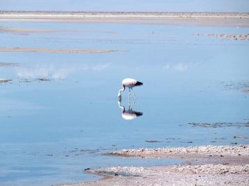 Laguna Chaxa et ses flamants roses