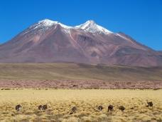 Nandous et volcan : magique