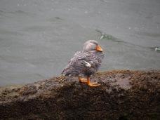 Ancud et ses oiseaux - Chili