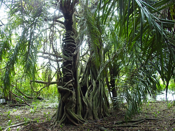 Forêt du Parc Pantanal