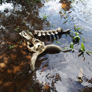Après anaconda - Parc Pantanal