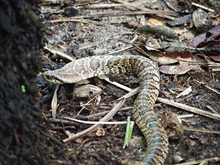 Anaconda - Parc Pantanal